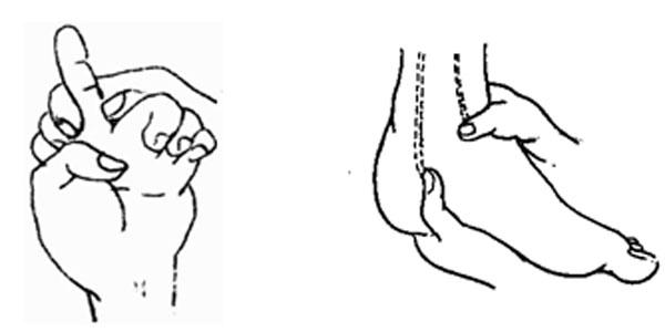 六招瑜伽动作减掉腰部赘肉图片