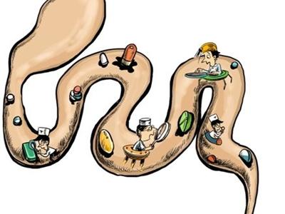 肠子在身体里的结构图
