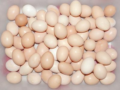 吃完鸡蛋不能吃什么 你知道么