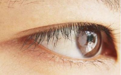 眼皮组织结构图