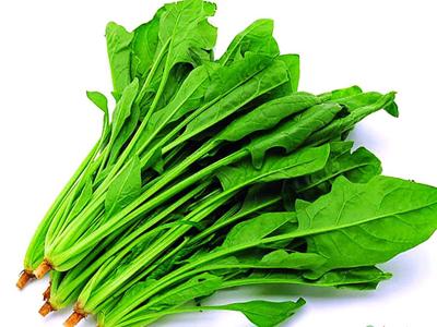 菠菜叶表皮细胞结构图加名称