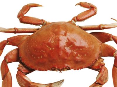 螃蟹灯笼制作步骤图解