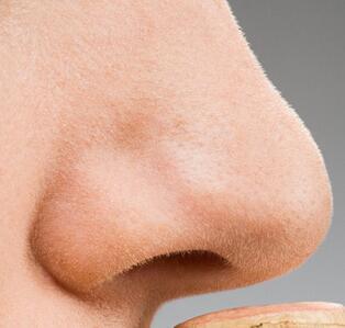 很可爱的小鼻子图片