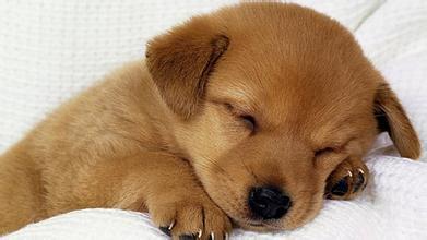 睡眠动物可爱图