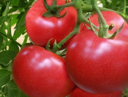 男人健康吃西红柿可以减肥