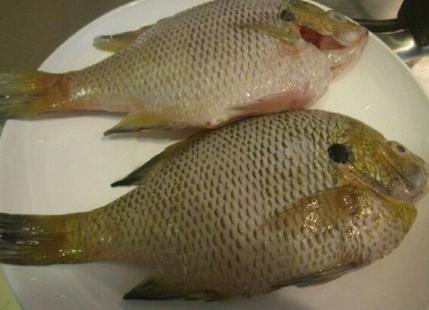 动物 鱼 鱼类 429