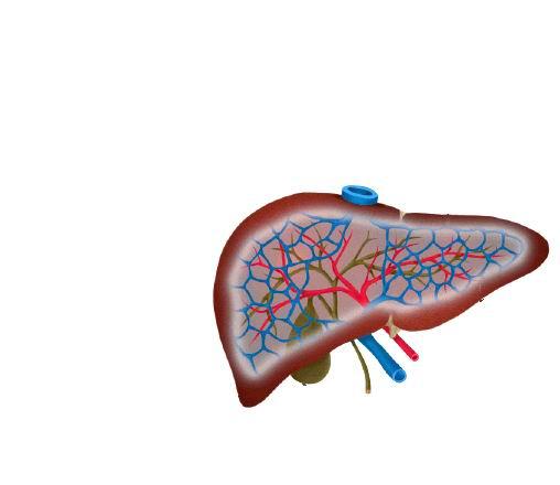 肝臟最愛7大營養,怎么養肝保肝