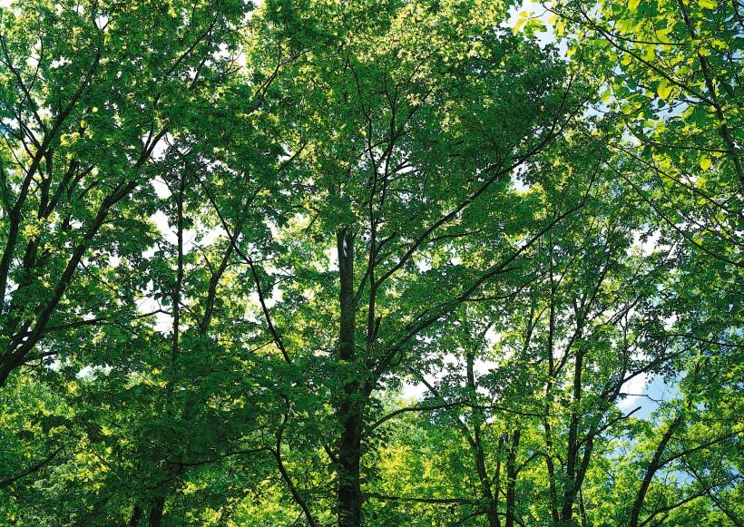 树木结构素描画