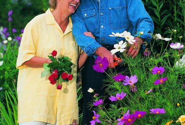 老年人适合养殖什么样花草