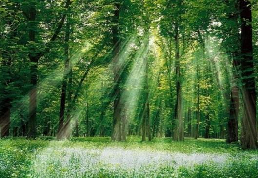壁纸 风景 森林 桌面 529_366