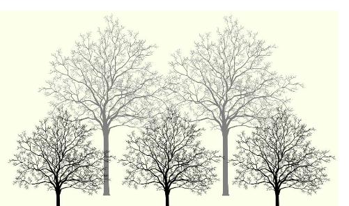 铅笔画柳树步骤