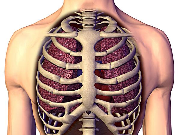咳嗽肋骨疼是怎么回事,咳嗽肋骨疼怎么缓解图片