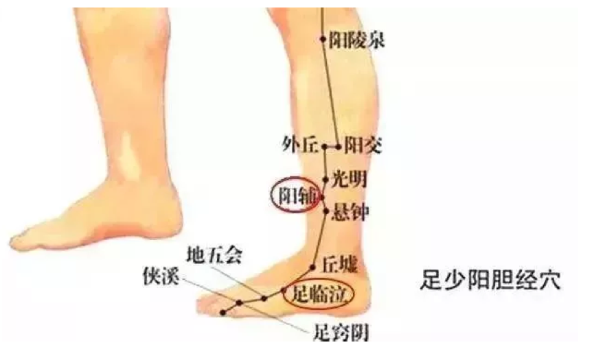 小腿的骨头结构图