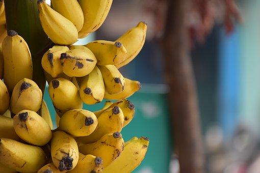 吃什么水果减肥有效果