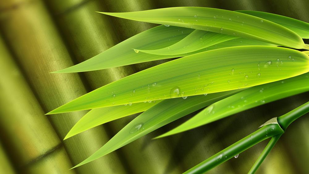 养生保健必知 竹叶的四大神奇作用