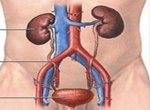 输尿管脱垂