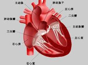 妊娠期心脏病