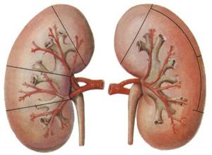 I型肾小管性酸中毒