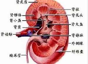 泌尿生殖系真菌病