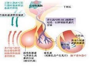 特发性低促性腺激素性性腺功能减退症