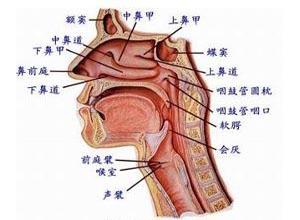 食管蹼和食管环