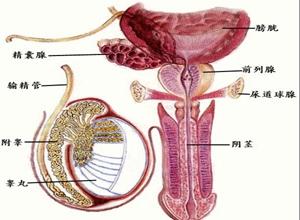 淋病合并症精囊炎