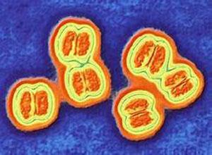 淋巴细胞脉络丛脑膜炎