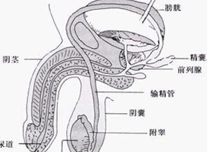 男生殖系结核