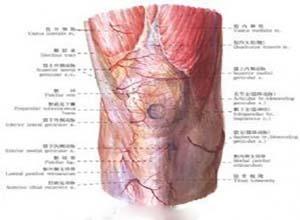 先天性膝关节脱位
