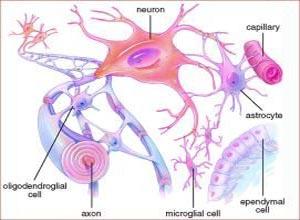 全植物神经功能不全