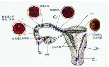 青少年及小儿卵巢肿瘤