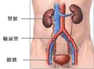 妊娠高血压疾病