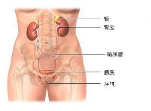 什么是尿道炎