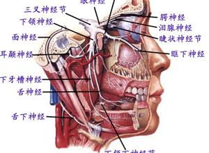 延髓进行性麻痹