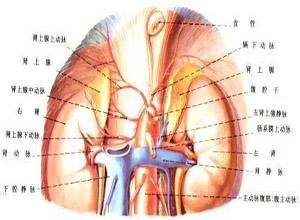 多发性内分泌肿瘤综合征Ⅰ型