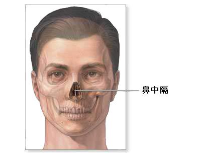 疾病知识 医疗资源 饮食宜忌 正常解剖:鼻中隔是由软骨组成,将鼻腔