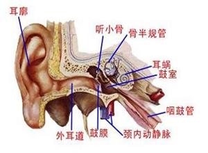 咽鼓管阻塞