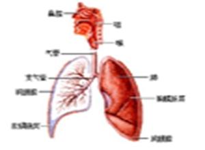 原发气管支气管肿瘤