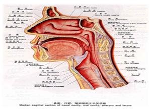 环咽肌失弛缓症