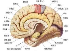 出血性休克和脑病综合征