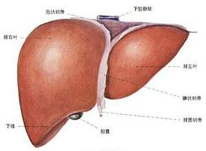 乙型病毒性肝炎