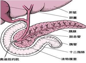 胰腺囊�[