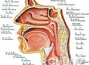 喉�d��