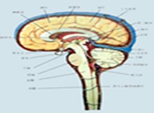 椎管内转移性肿瘤