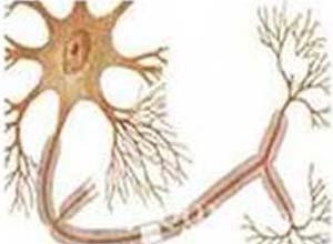颠茄碱类植物药物中毒