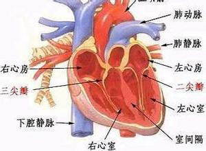 高血压性心肌病