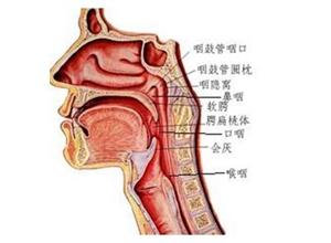 咽侧壁憩室