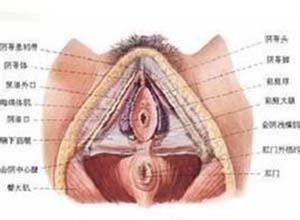 外陰大汗腺瘤