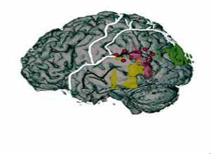 癫痫发作与癫痫综合征