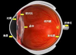 浅层点状角膜炎
